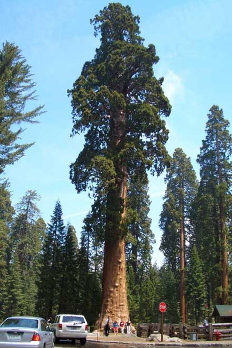 sequoia_07-11d6905.jpg