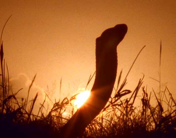 serpent-d-1-157b48e1.jpg