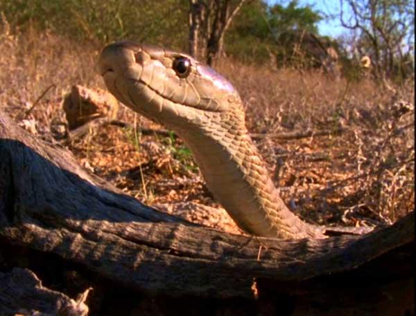 serpent-d-2-157b45c.jpg