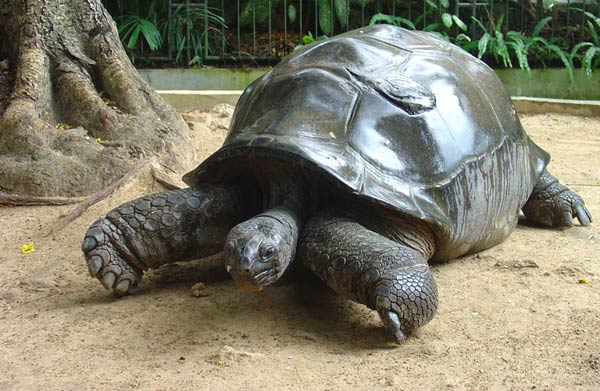 seychelles-tortue.jpg