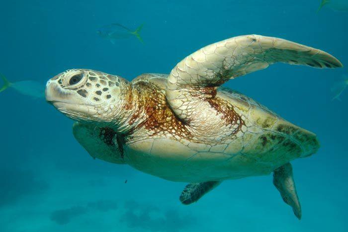 tortue-marine-3.jpg