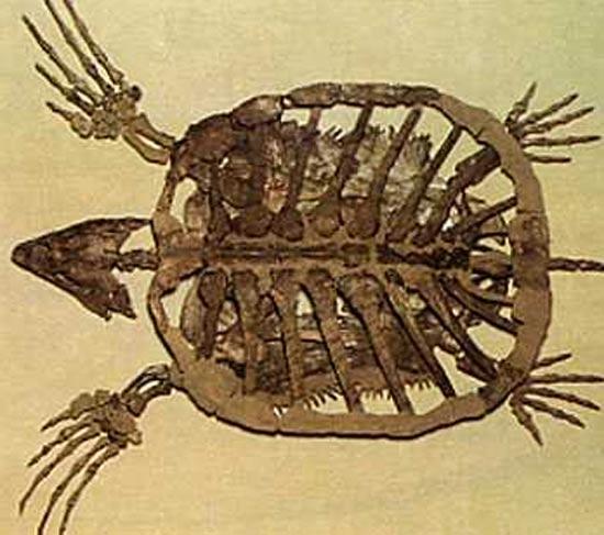 tortue-prehistorique-3.jpg