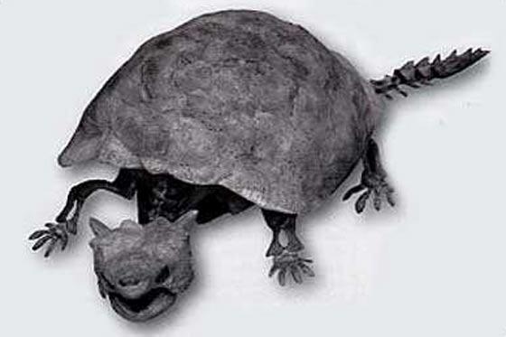 tortue-prehistorique-4.jpg