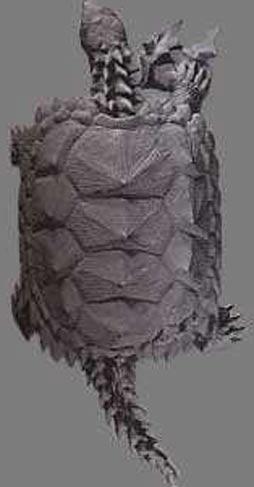 tortue-prehistorique.jpg