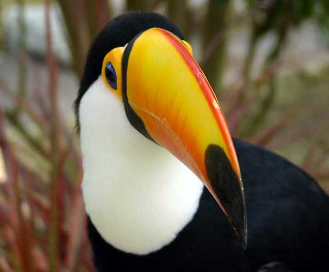 toucan-13d2db9.jpg