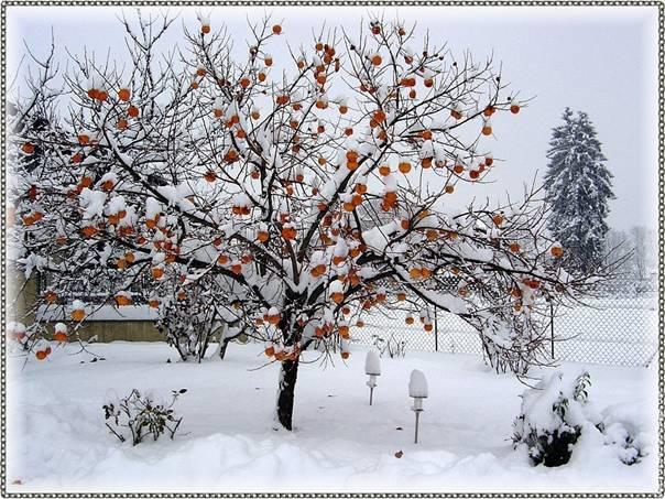 vague-de-froid-hiver-2008-2009-thomas-29-11-2008_clip_image002.jpg